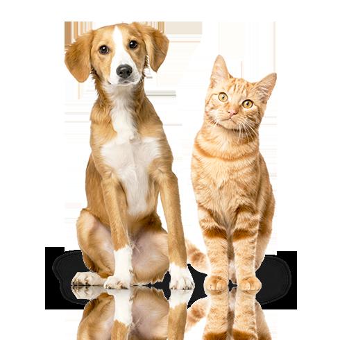 recorte-cao-e-gato-dottor-dog